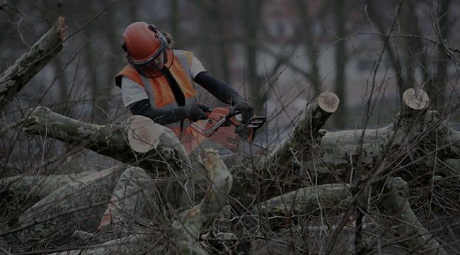 Suwanee Tree Service